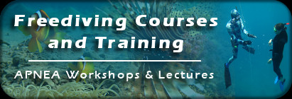 Freediving Courses & Training